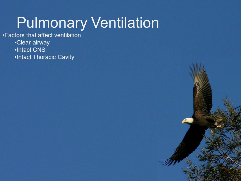 Pulmonary Ventilation Factors that affect ventilation Clear airway Intact CNS Intact Thoracic Cavity