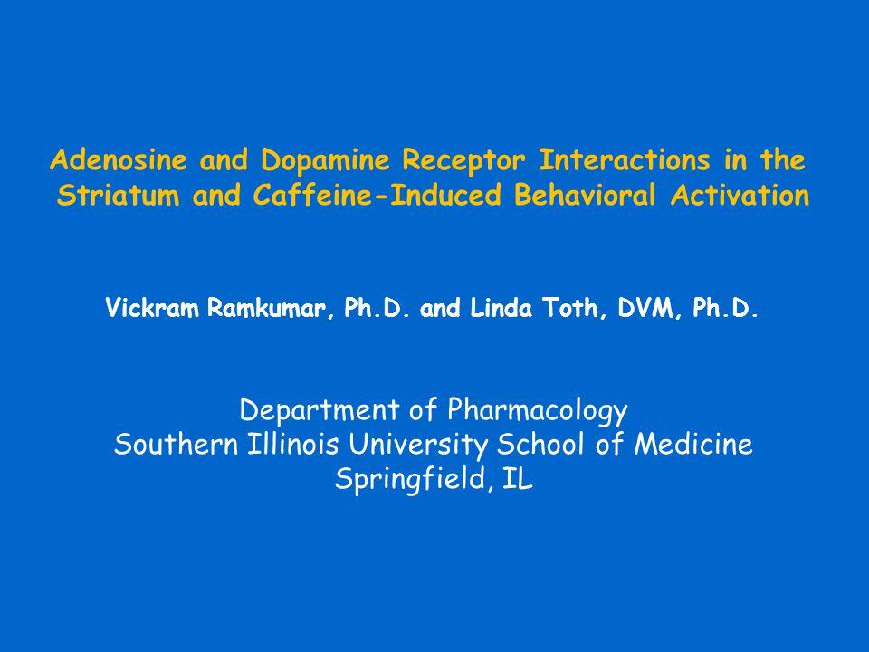 Adenosine and Dopamine Receptor Interactions in the Striatum