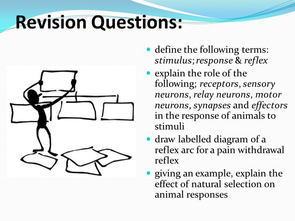 Core For Sl Hl E1 Stimulus And Response E2 Perception Of