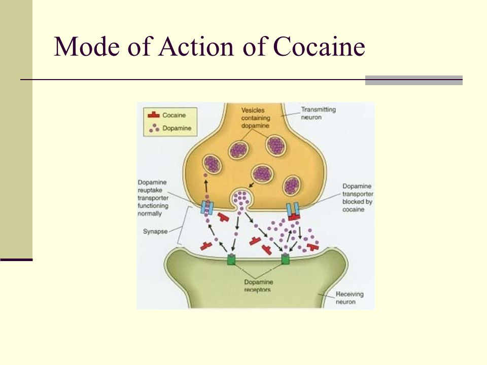 cocaine mode of action