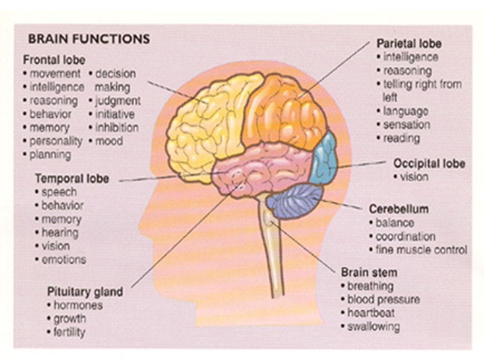 parts of the brain