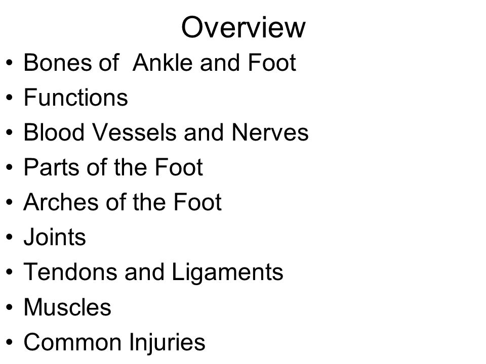 Overview Bones of Ankle and Foot Functions Blood Vessels and Nerves Parts of the Foot Arches of the Foot Joints Tendons and Ligaments Muscles Common Injuries