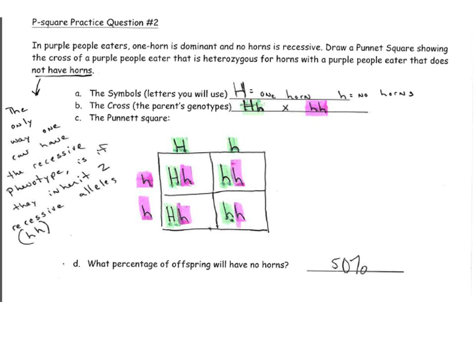 Cross Example Problems Kids Monohybrid Cross Worksheet Answer Key