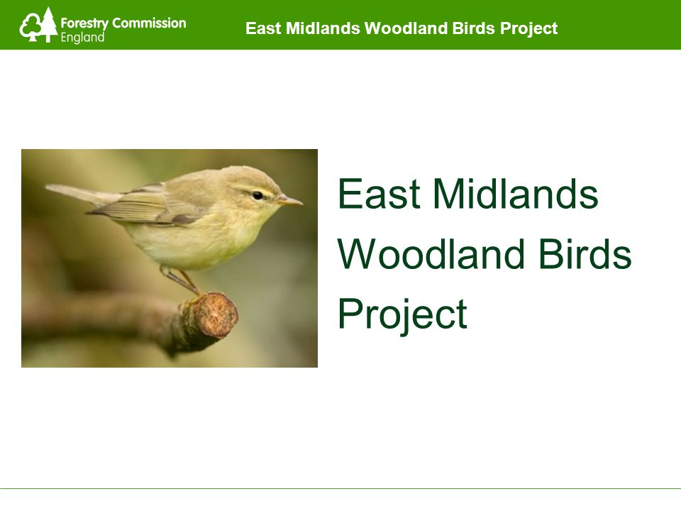 East Midlands Woodland Birds Project East Midlands Woodland Birds Project