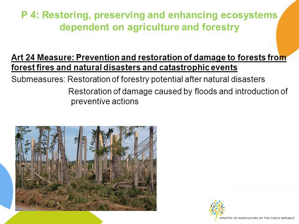 P 4: Restoring, preserving and enhancing ecosystems dependent on agriculture and forestry Art 24 Measure: Prevention and restoration of damage to forests from forest fires and natural disasters and catastrophic events Submeasures: Restoration of forestry potential after natural disasters Restoration of damage caused by floods and introduction of preventive actions