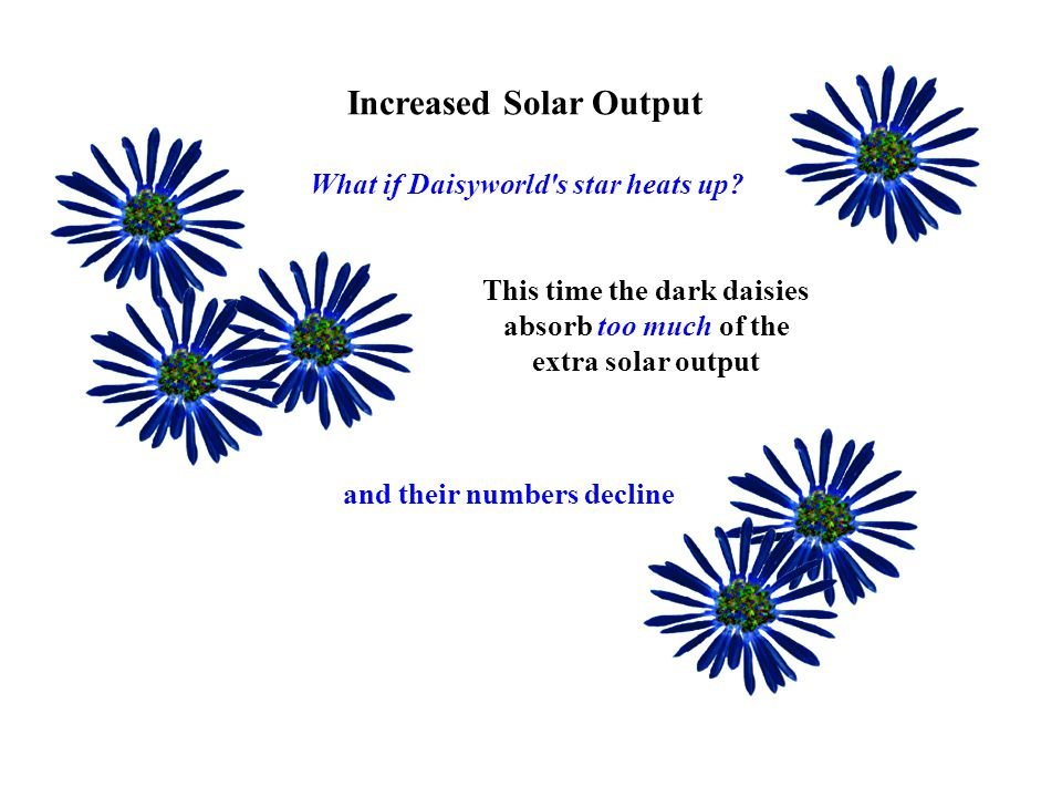 Increased Solar Output This time the dark daisies absorb too much of the extra solar output What if Daisyworld s star heats up.