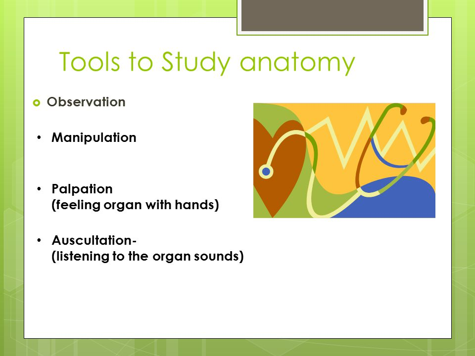 Chapter 1 The Human Body An Orientation Anatomy Vs Physiology