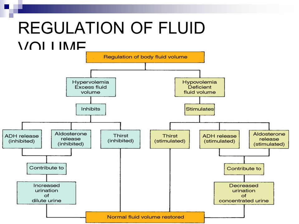 REGULATION OF FLUID VOLUME