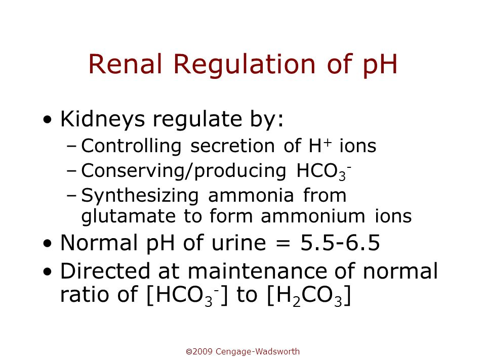  2009 Cengage-Wadsworth Renal Regulation of pH Kidneys regulate by: –Controlling secretion of H + ions –Conserving/producing HCO 3 - –Synthesizing ammonia from glutamate to form ammonium ions Normal pH of urine = Directed at maintenance of normal ratio of [HCO 3 - ] to [H 2 CO 3 ]