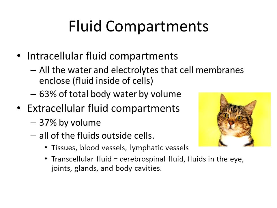 Fluid Compartments Intracellular fluid compartments – All the water and electrolytes that cell membranes enclose (fluid inside of cells) – 63% of total body water by volume Extracellular fluid compartments – 37% by volume – all of the fluids outside cells.