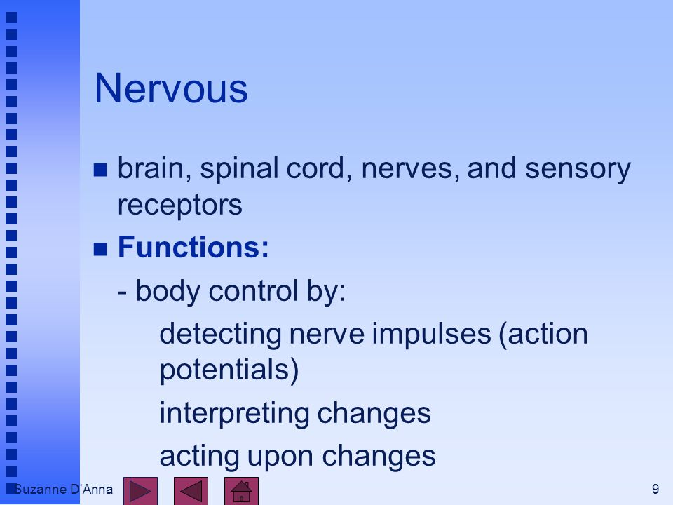 Suzanne D Anna9 Nervous n brain, spinal cord, nerves, and sensory receptors n Functions: - body control by: detecting nerve impulses (action potentials) interpreting changes acting upon changes