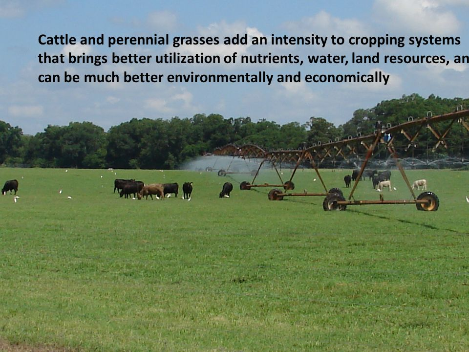 Cattle and perennial grasses add an intensity to cropping systems that brings better utilization of nutrients, water, land resources, and can be much better environmentally and economically