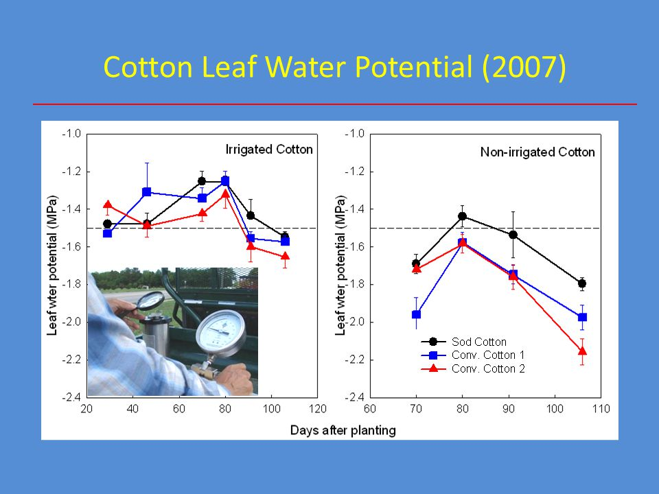 Cotton Leaf Water Potential (2007)