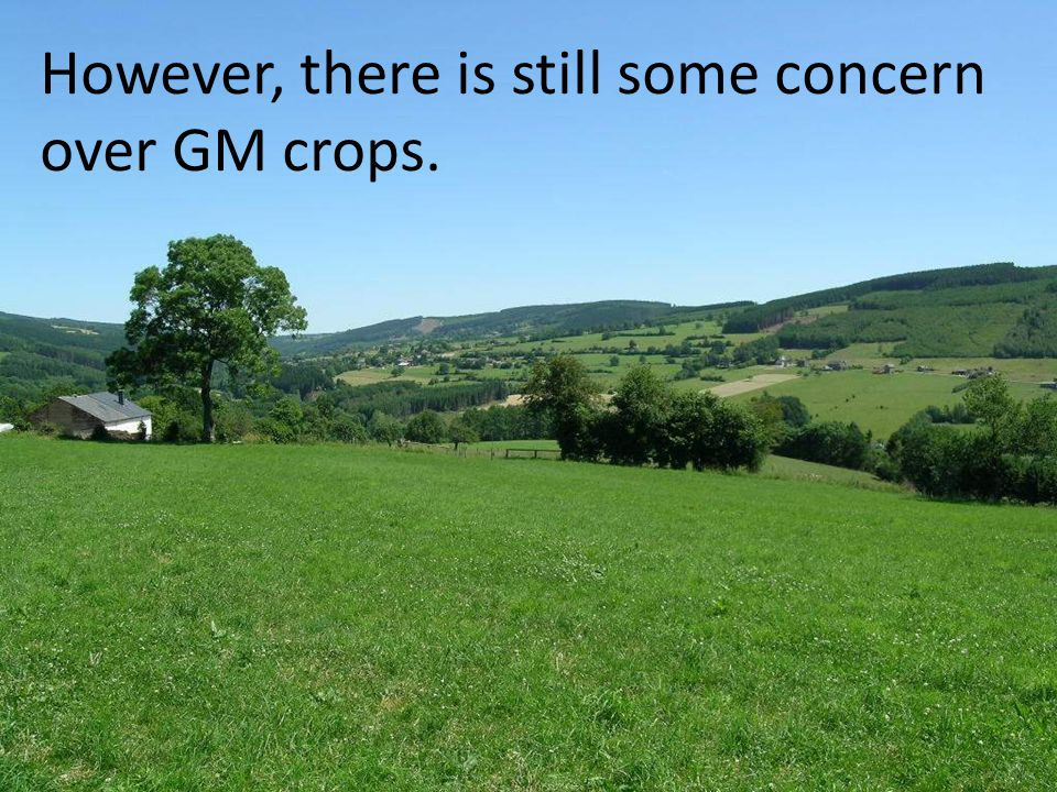 However, there is still some concern over GM crops.