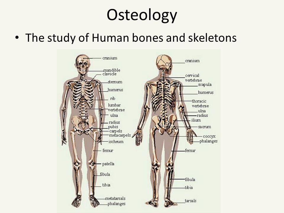 Forensic Anthropology Anthropology Anthropology Is The Study Of