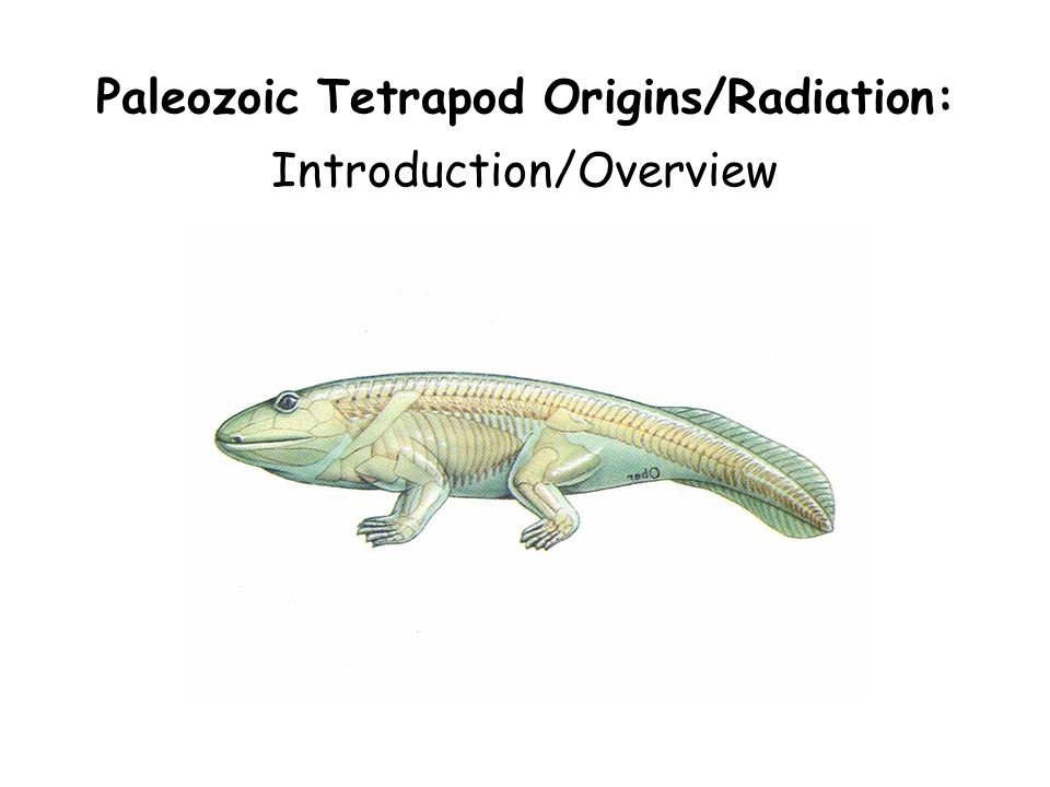 Paleozoic Tetrapod Originsradiation Introductionoverview Ppt