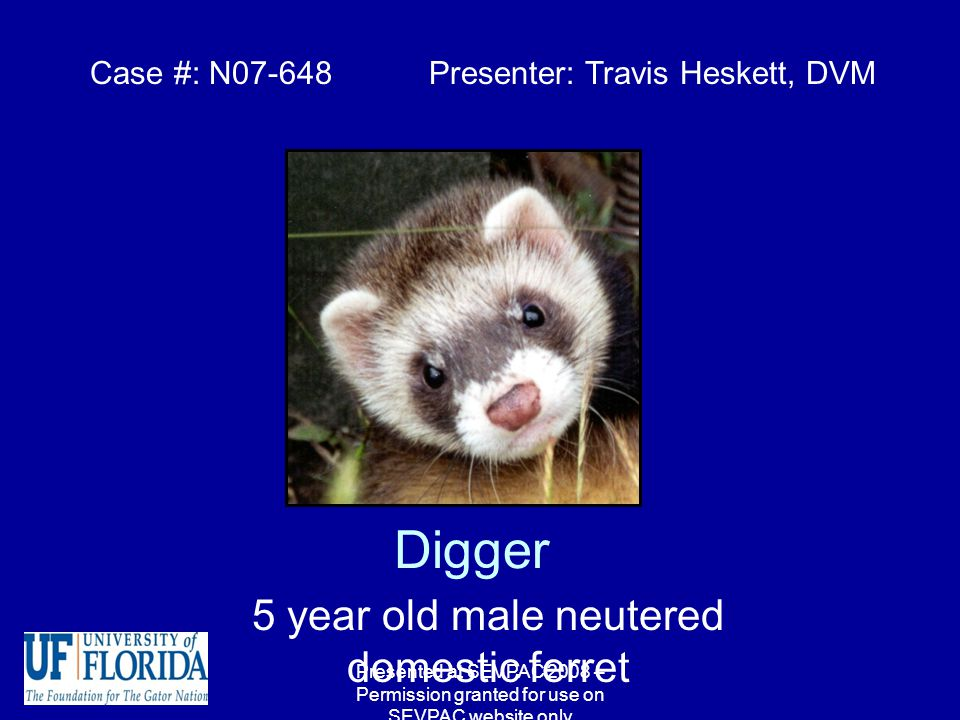 Digger 5 year old male neutered domestic ferret Case #: N Presenter ...