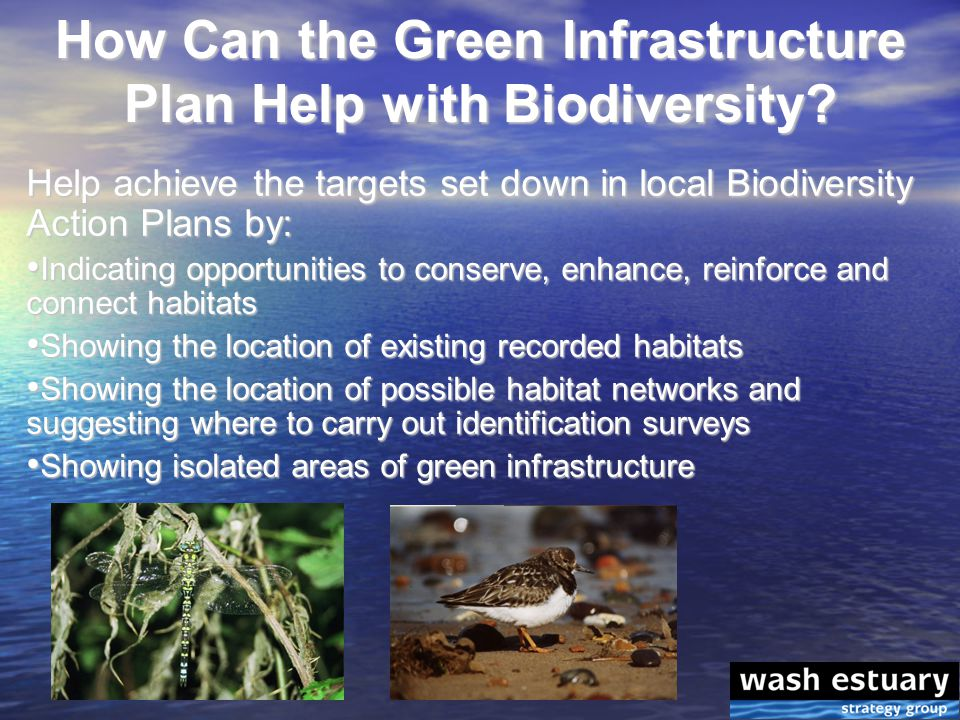How Can the Green Infrastructure Plan Help with Biodiversity.