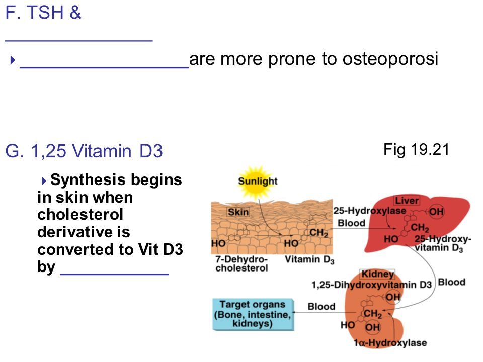 F. TSH & ______________  ________________are more prone to osteoporosi G.