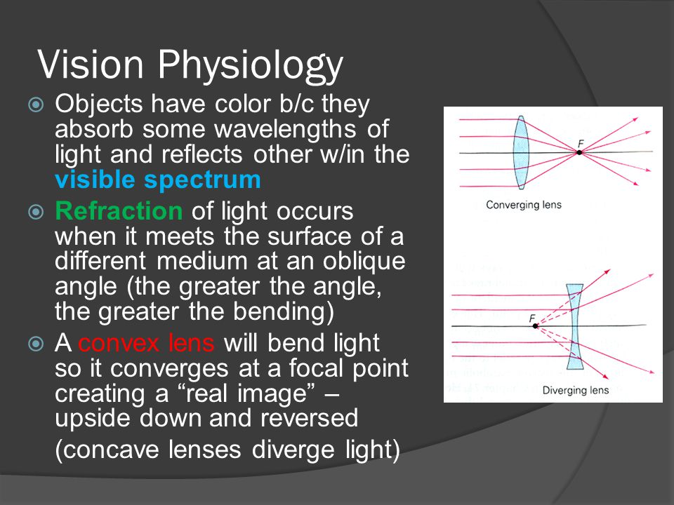 Vision Physiology  Objects have color b/c they absorb some wavelengths of light and reflects other w/in the visible spectrum  Refraction of light occurs when it meets the surface of a different medium at an oblique angle (the greater the angle, the greater the bending)  A convex lens will bend light so it converges at a focal point creating a real image – upside down and reversed (concave lenses diverge light)