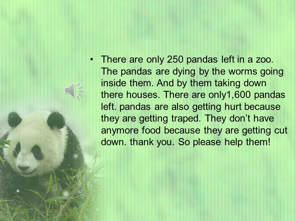 Hello. Pandas live in China. Pandas only eat five different bamboo.