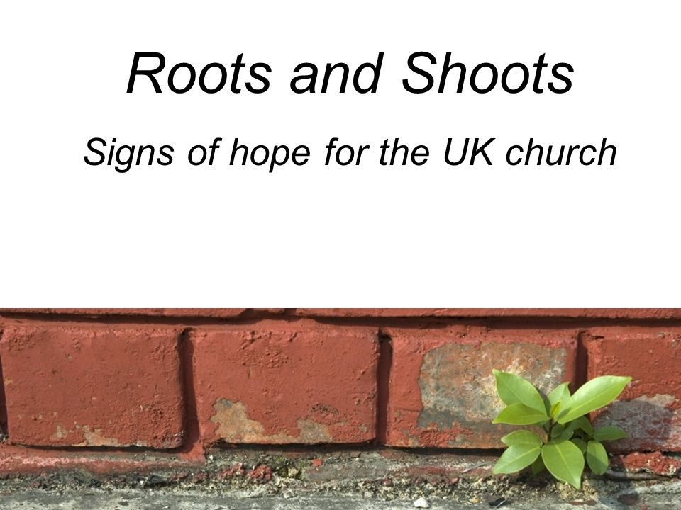 Roots and Shoots Signs of hope for the UK church