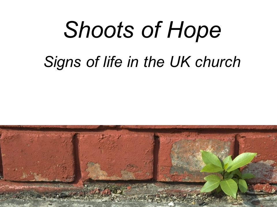Shoots of Hope Signs of life in the UK church