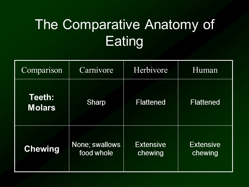 We are what we eat ! Comparative Anatomy 1 1 Is our body designed to ...