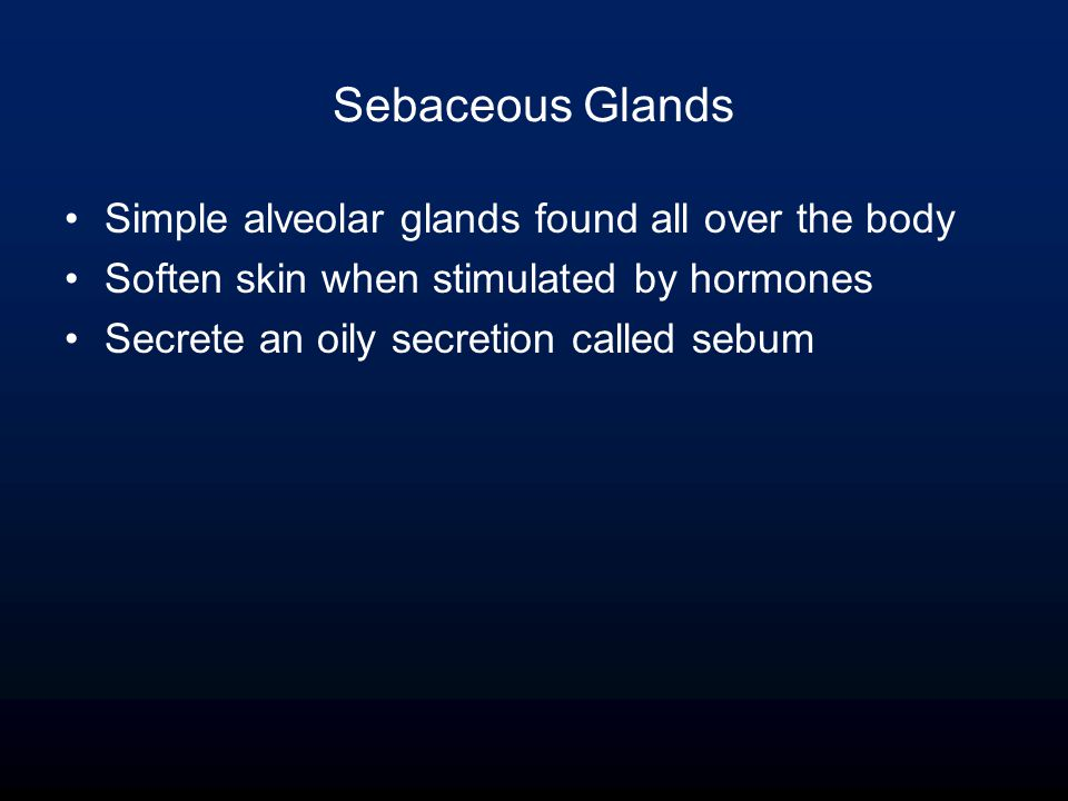 Sebaceous Glands Simple alveolar glands found all over the body Soften skin when stimulated by hormones Secrete an oily secretion called sebum