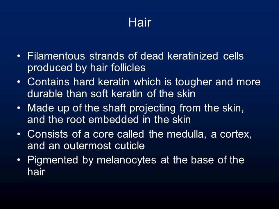 Hair Filamentous strands of dead keratinized cells produced by hair follicles Contains hard keratin which is tougher and more durable than soft keratin of the skin Made up of the shaft projecting from the skin, and the root embedded in the skin Consists of a core called the medulla, a cortex, and an outermost cuticle Pigmented by melanocytes at the base of the hair