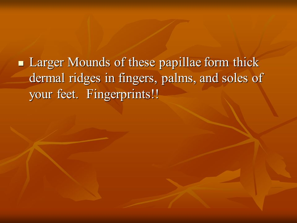 Larger Mounds of these papillae form thick dermal ridges in fingers, palms, and soles of your feet.