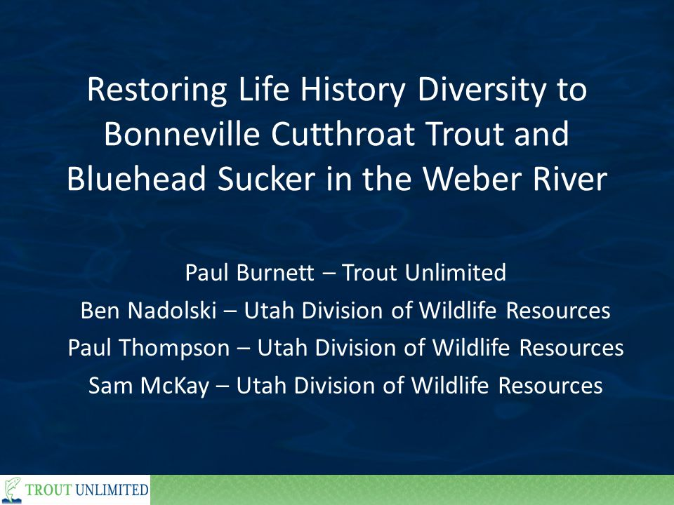 Restoring Life History Diversity to Bonneville Cutthroat Trout and Bluehead Sucker in the Weber River Paul Burnett – Trout Unlimited Ben Nadolski – Utah Division of Wildlife Resources Paul Thompson – Utah Division of Wildlife Resources Sam McKay – Utah Division of Wildlife Resources