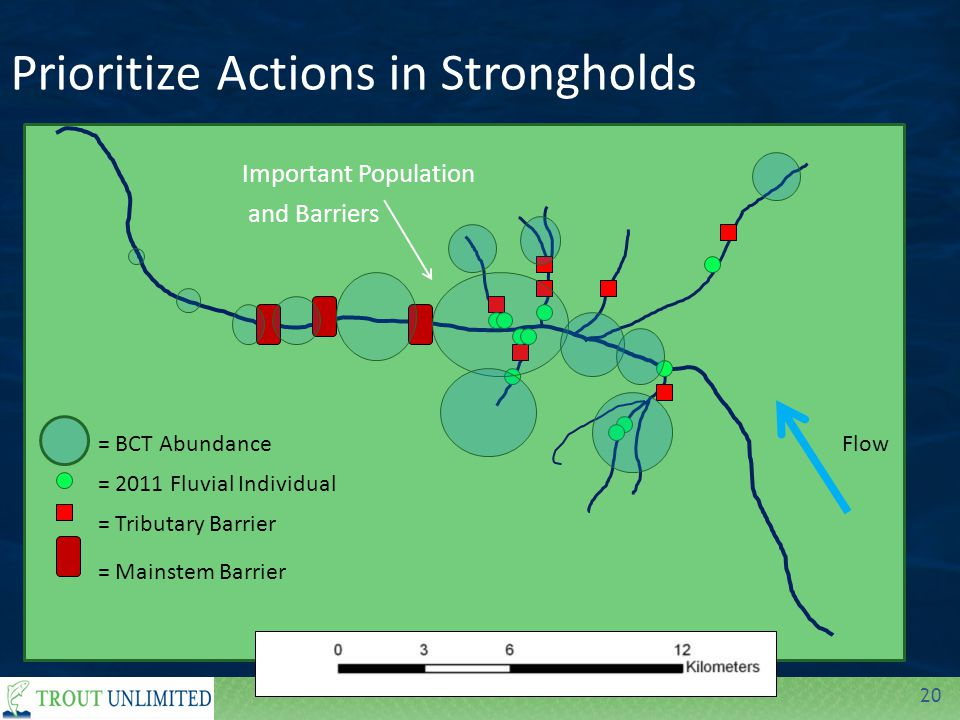 20 Prioritize Actions in Strongholds = Tributary Barrier = Mainstem Barrier = 2011 Fluvial Individual = BCT AbundanceFlow Important Population and Barriers