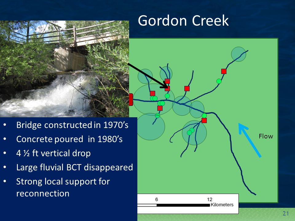 21 Gordon Creek = Tributary Barrier = Mainstem Barrier = Fluvial Individual = BCT AbundanceFlow Bridge constructed in 1970's Concrete poured in 1980's 4 ½ ft vertical drop Large fluvial BCT disappeared Strong local support for reconnection