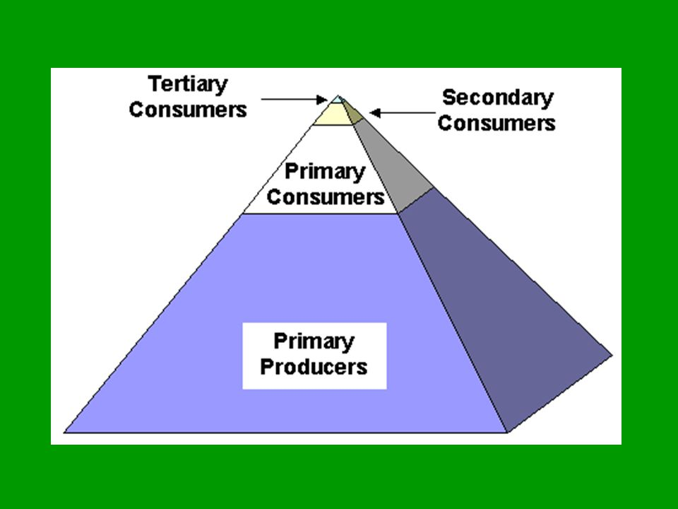 Energy flow in an ecosystem Pyramid of Biomass – total mass of living matter at each trophic level 100 kg of grain is needed to support 10 kg of beef which supports 1 kg of human tissue