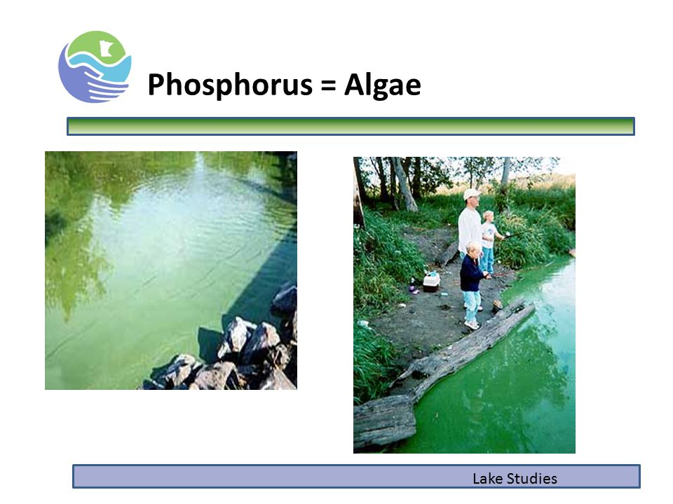 Phosphorus = Algae Lake Studies