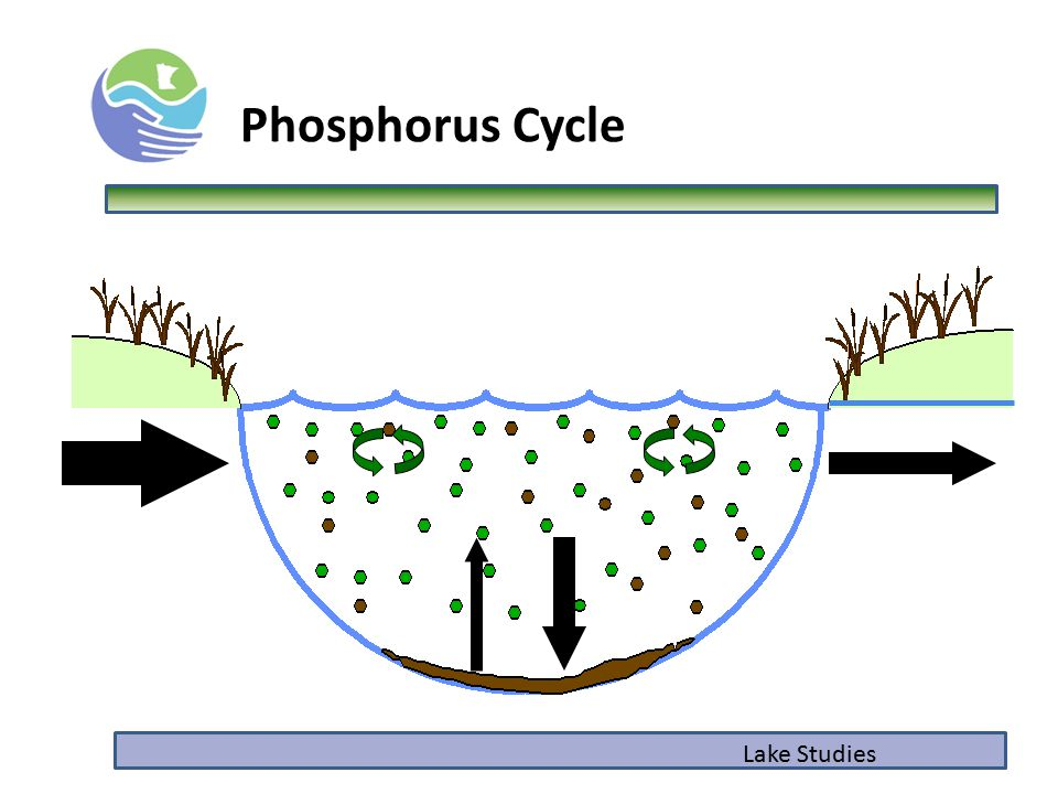 Phosphorus Cycle Lake Studies