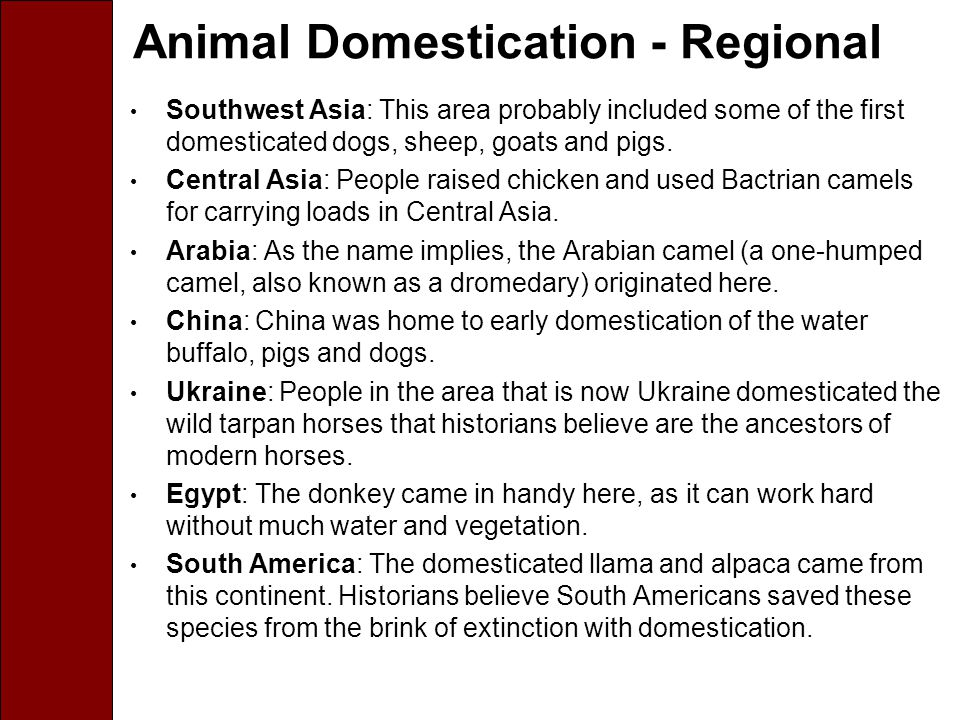 Animal Domestication - Regional Southwest Asia: This area probably included some of the first domesticated dogs, sheep, goats and pigs.