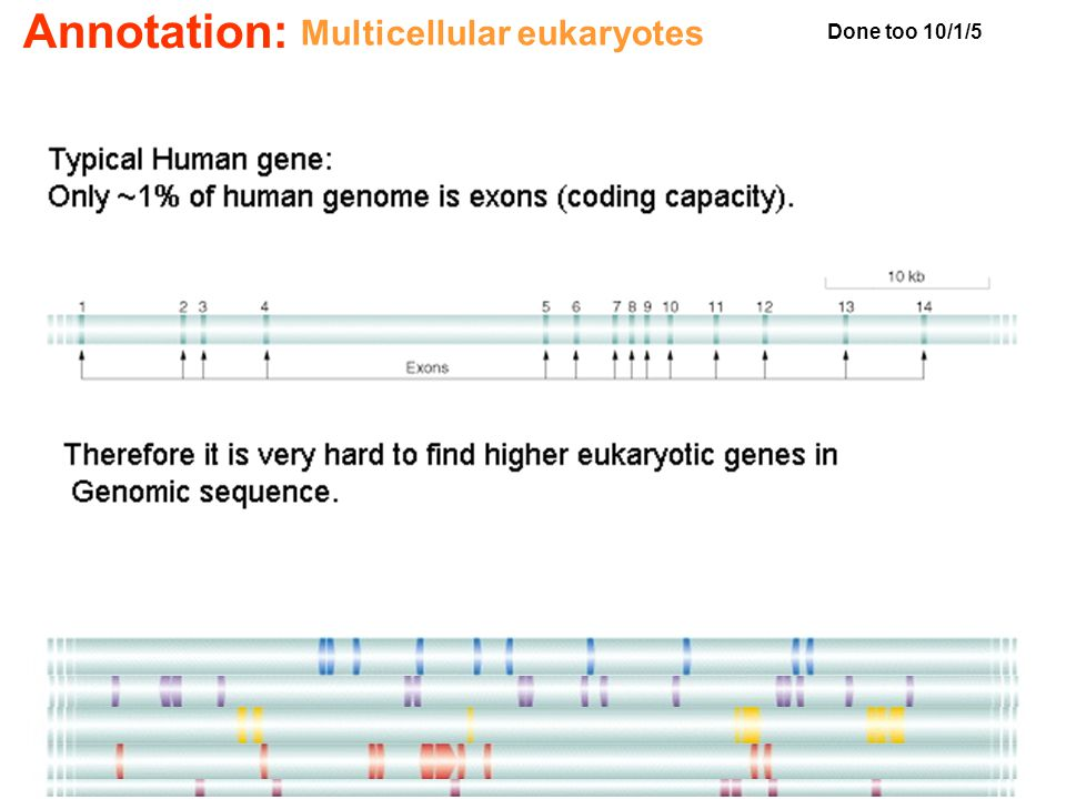 Multicellular eukaryotes Annotation: Done too 10/1/5