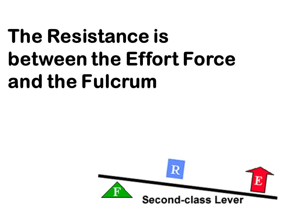 The Resistance is between the Effort Force and the Fulcrum