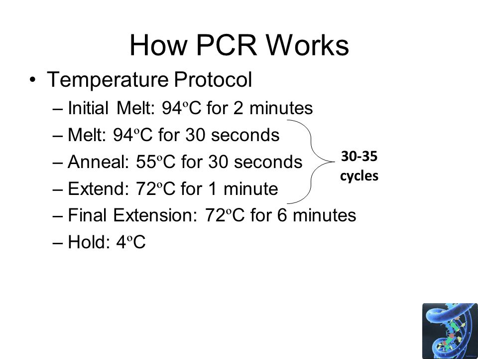 How PCR Works Temperature Protocol –Initial Melt: 94 º C for 2 minutes –Melt: 94 º C for 30 seconds –Anneal: 55 º C for 30 seconds –Extend: 72 º C for 1 minute –Final Extension: 72 º C for 6 minutes –Hold: 4 º C cycles