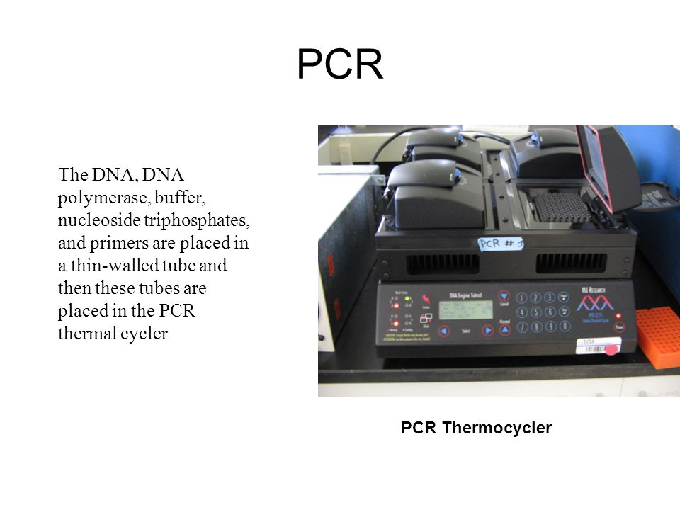 PCR The DNA, DNA polymerase, buffer, nucleoside triphosphates, and primers are placed in a thin-walled tube and then these tubes are placed in the PCR thermal cycler PCR Thermocycler