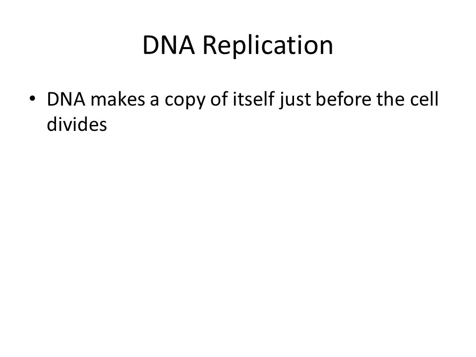 DNA Replication DNA makes a copy of itself just before the cell divides