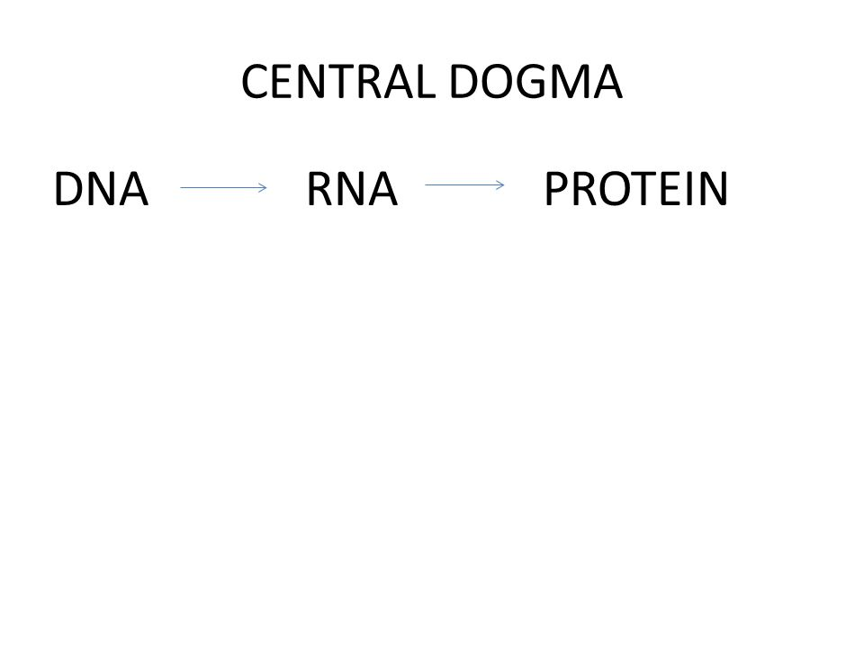 CENTRAL DOGMA DNA RNA PROTEIN