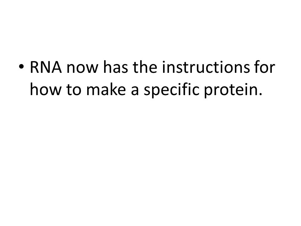 RNA now has the instructions for how to make a specific protein.