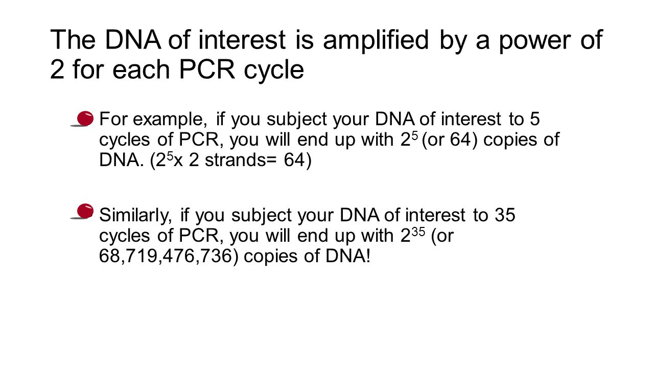 The DNA of interest is amplified by a power of 2 for each PCR cycle For example, if you subject your DNA of interest to 5 cycles of PCR, you will end up with 2 5 (or 64) copies of DNA.