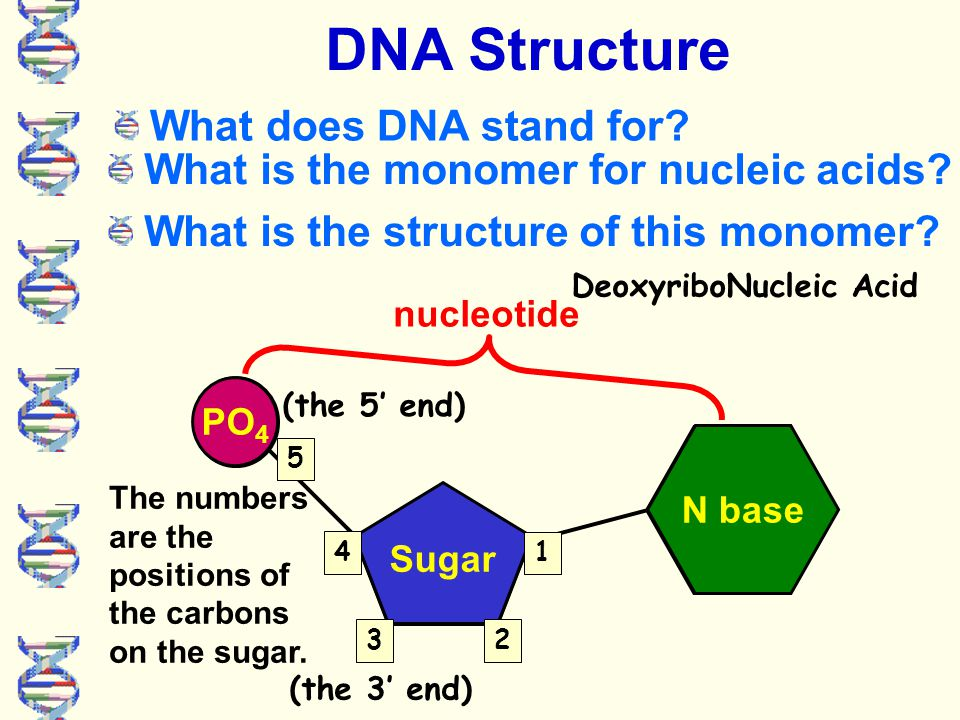 Dna And Rna Transcription And Translation What Do All Of These