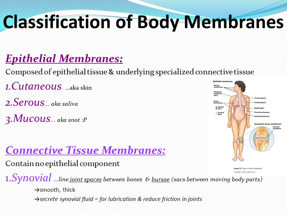 body membranes function