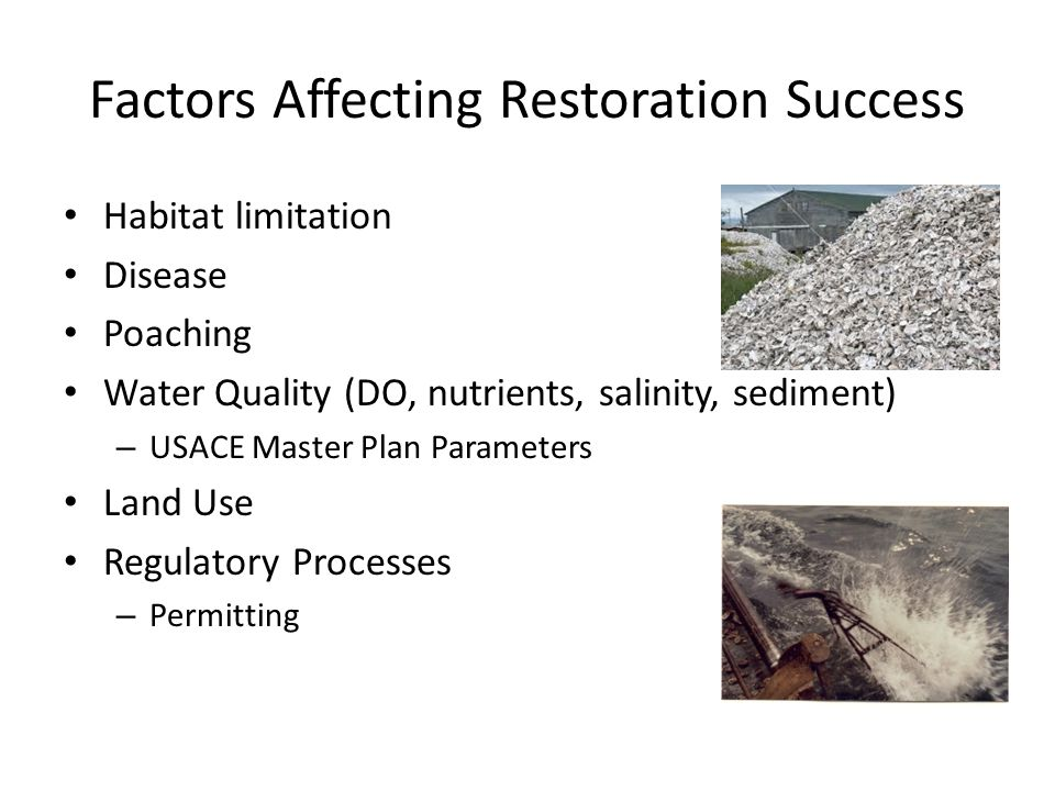 Factors Affecting Restoration Success Habitat limitation Disease Poaching Water Quality (DO, nutrients, salinity, sediment) – USACE Master Plan Parameters Land Use Regulatory Processes – Permitting