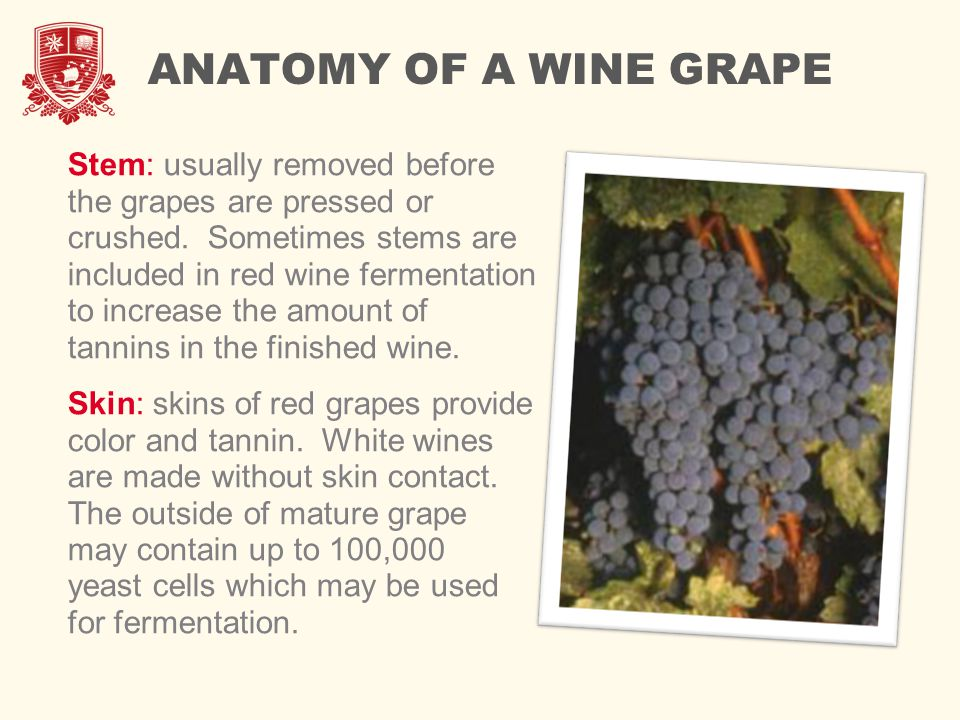 Viticulture Introduction In This Module We Will Introduce The